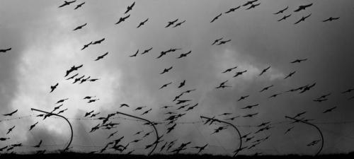 uccelli border